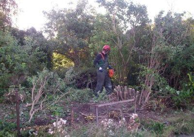 Nedskæring af buske og træer som er blevet for stort