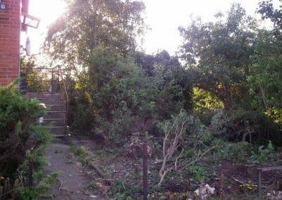 Beskæring af totalt nyt haveanlæg i en gammel have