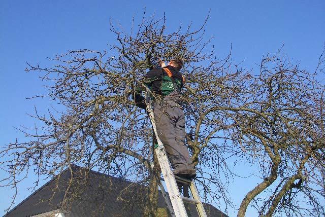 Beskæring af træer Odense og Fyn